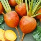 Picture of BEETROOT GOLD ORGANIC / KG